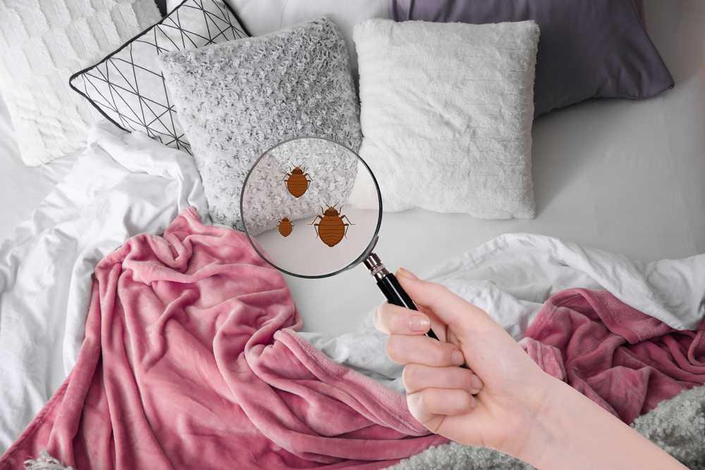 Kammerjäger Bettwanzen