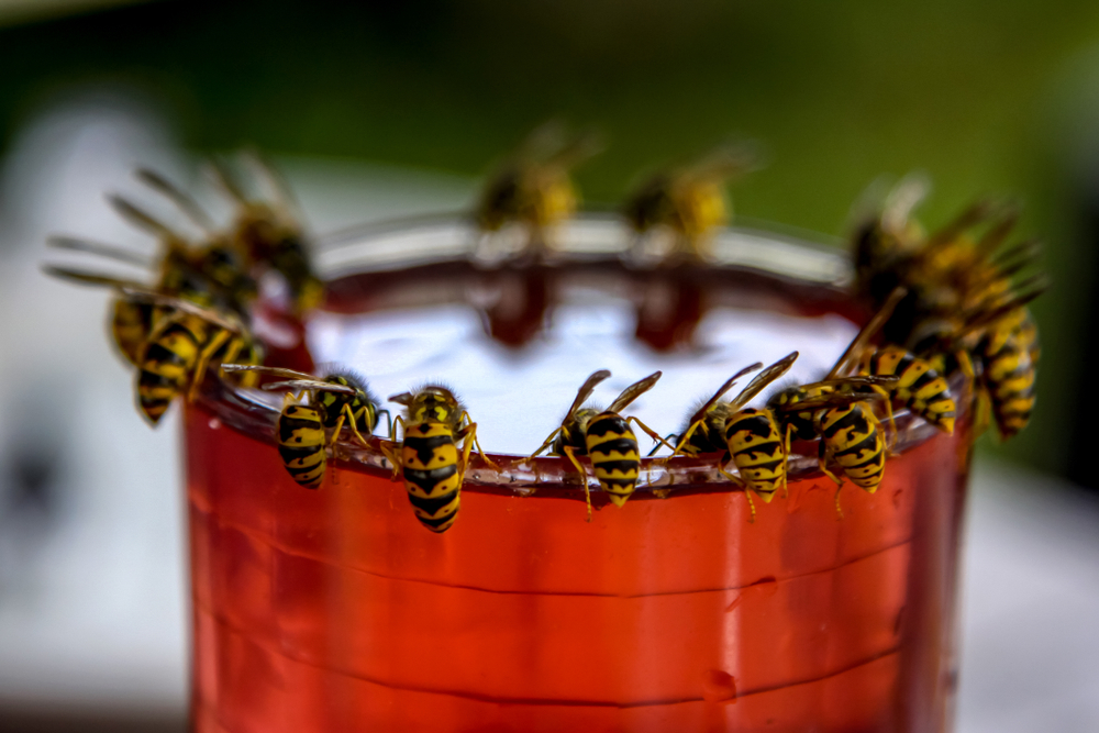 Kammerjäger für Wespen
